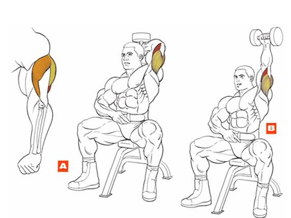 Упражнения в домашних условиях без гантелей для мужчин