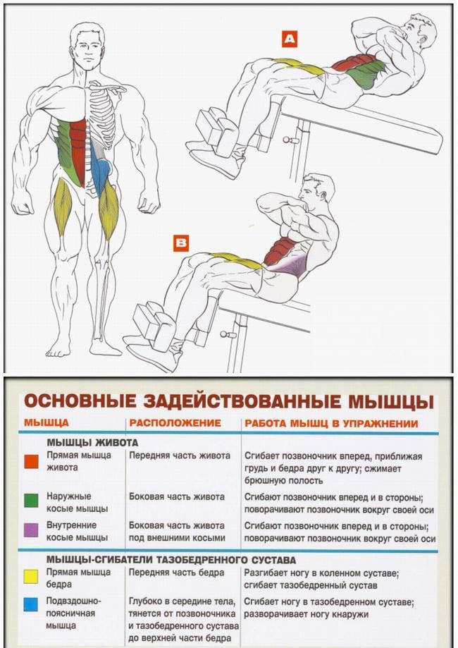 Скручивания на скамье с наклоном вниз